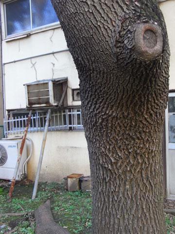 20111123_11.jpg